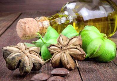 Aceite de Sacha Inchi: Potencial exportador peruano